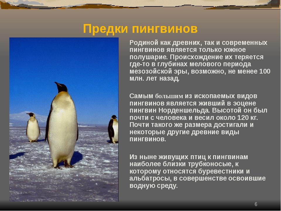 * Родиной как древних, так и современных пингвинов является только южное полу...