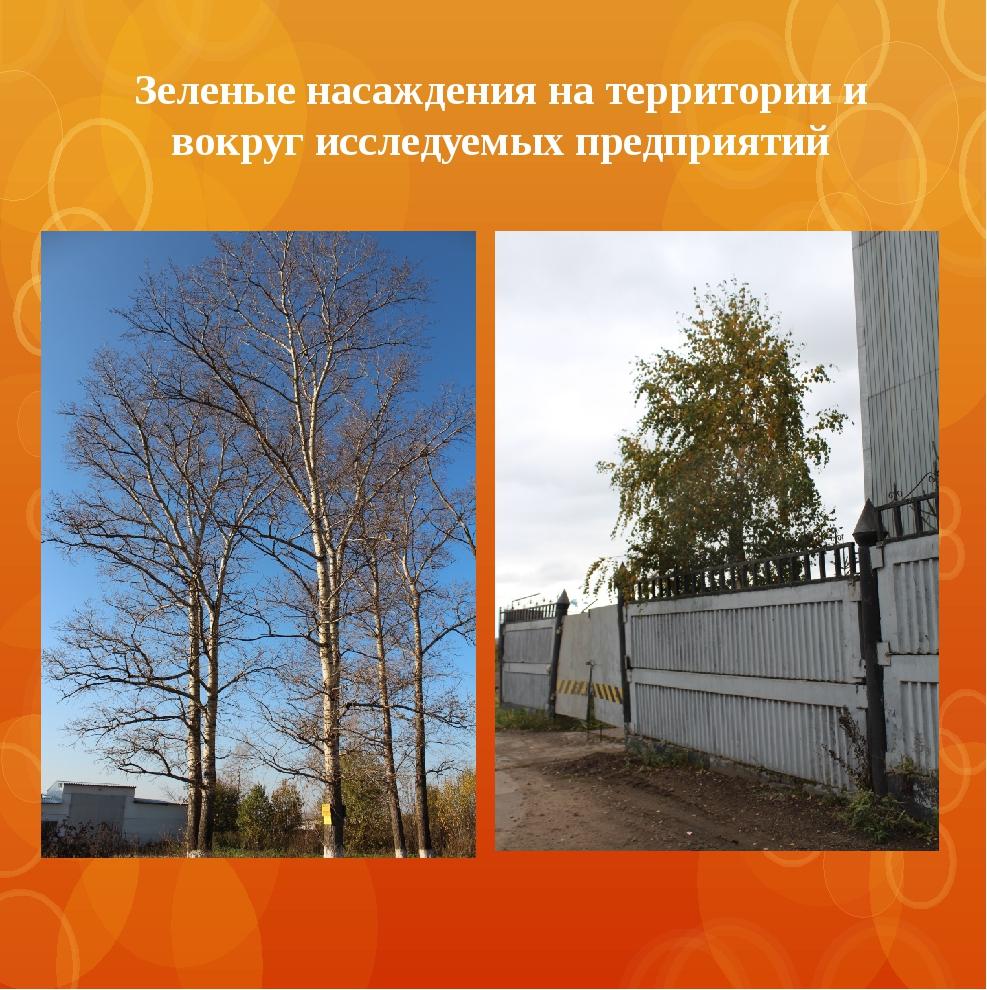 Зеленые насаждения на территории и вокруг исследуемых предприятий