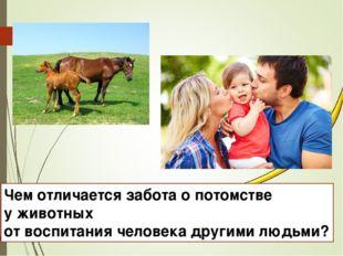 Чем отличается забота о потомстве у животных от воспитания человека другими л