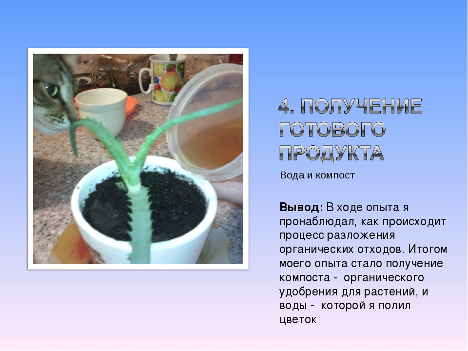 Вода и компост Вывод: В ходе опыта я пронаблюдал, как происходит процесс разл...