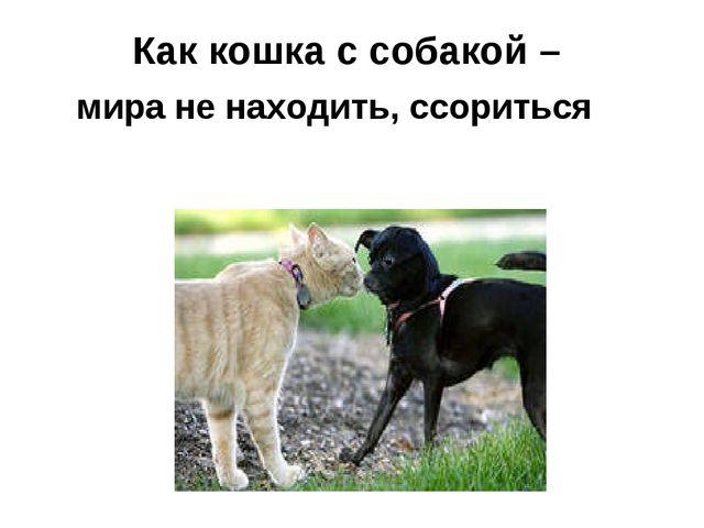 Как кошка с собакой – мира не находить, ссориться