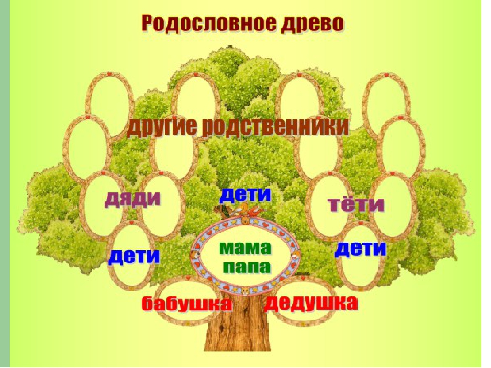 Последние как объяснить детям что такое генеологическое дерево уши дает