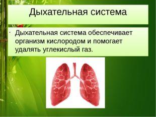 Дыхательная система Дыхательная система обеспечивает организм кислородом и по