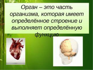 Орган – это часть организма, которая имеет определённое строение и выполняет