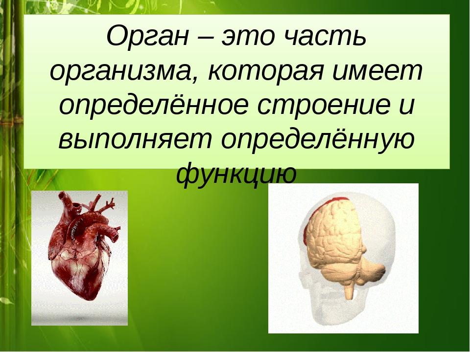 Орган – это часть организма, которая имеет определённое строение и выполняет...