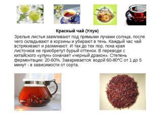 Красный чай (Улун) Зрелые листья завяливают под прямыми лучами солнца, после