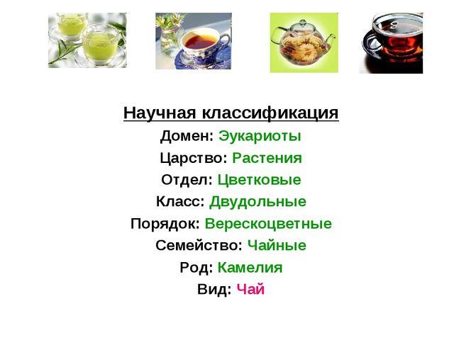 Научная классификация Домен: Эукариоты Царство: Растения Отдел: Цветковые Кла...