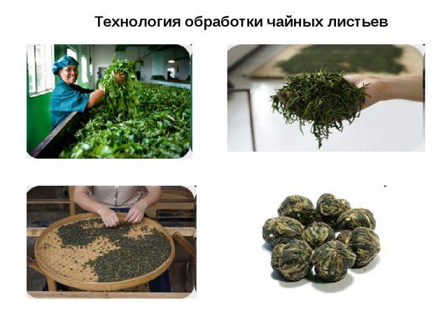 Технология обработки чайных листьев