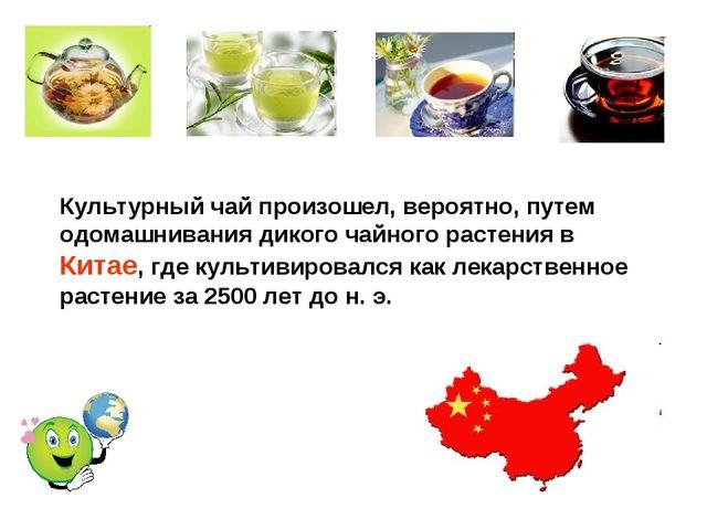 Культурный чай произошел, вероятно, путем одомашнивания дикого чайного растен...