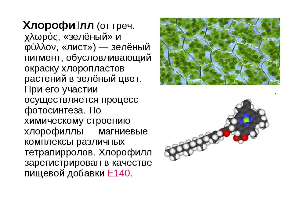 Хлорофи́лл (от греч. χλωρός, «зелёный» и φύλλον, «лист»)— зелёный пигмент,...