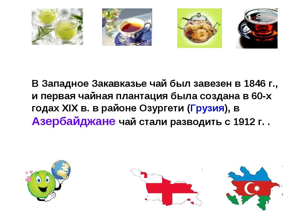 В Западное Закавказье чай был завезен в 1846 г., и первая чайная плантация б...
