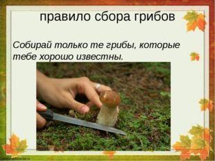 правило сбора грибов Собирай только те грибы, которые тебе хорошо известны.