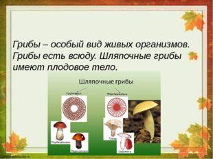 Грибы – особый вид живых организмов. Грибы есть всюду. Шляпочные грибы имеют