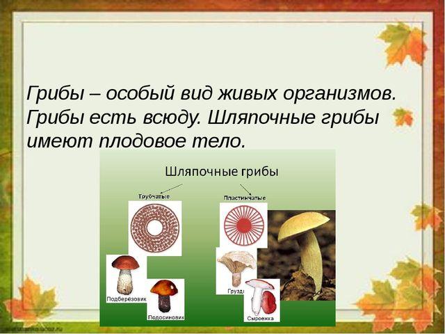 Грибы – особый вид живых организмов. Грибы есть всюду. Шляпочные грибы имеют...