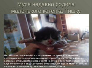 Муся недавно родила маленького котенка Тишку На свет котята появляются с закр