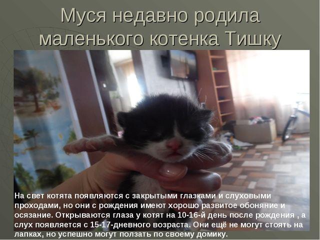 Муся недавно родила маленького котенка Тишку На свет котята появляются с закр...