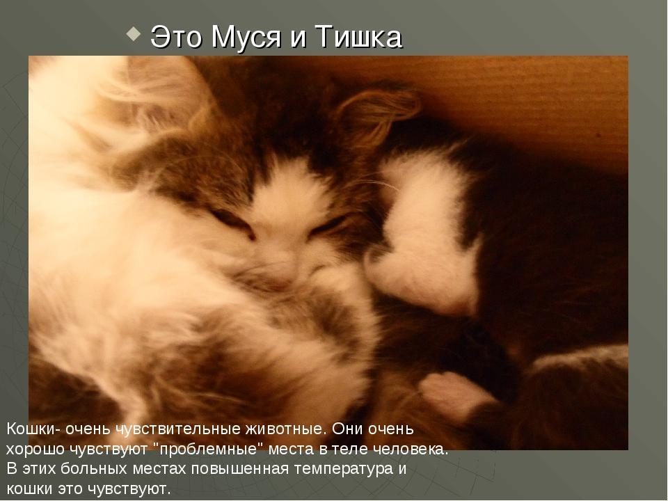 Это Муся и Тишка Кошки- очень чувствительные животные. Они очень хорошо чувст...