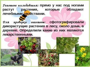 Гипотеза исследования: прямо у нас под ногами растут растения, которые облада