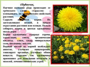 Одуванчик Научное название рода происходит от греческого слова «тарассен» – у