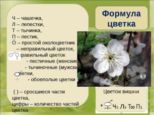 Ч – чашечка, Л – лепестки, Т – тычинка, П – пестик, О – простой околоцветник