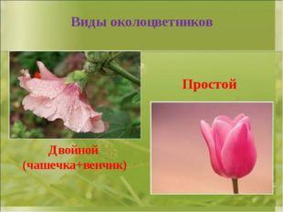 Виды околоцветников Двойной (чашечка+венчик) Простой