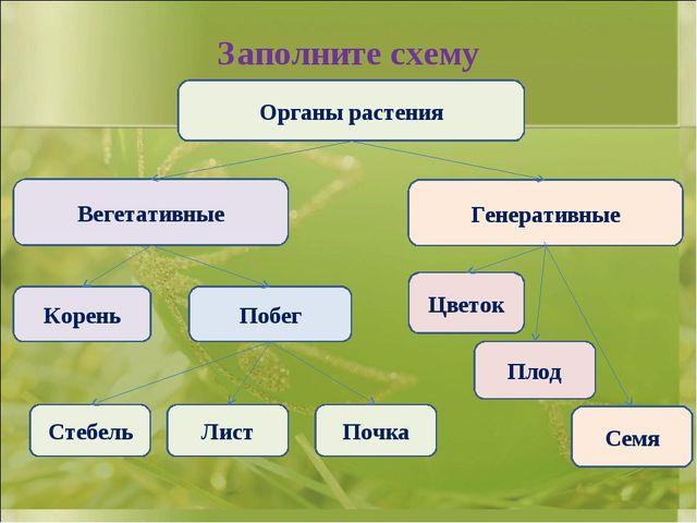 Заполните схему Органы растения Вегетативные Генеративные Корень Побег Цветок...
