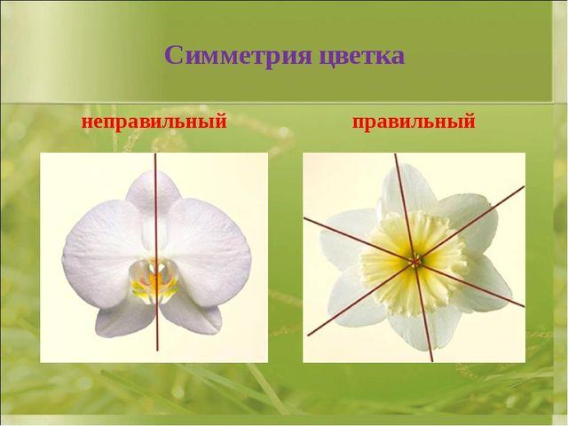 Симметрия цветка неправильный правильный