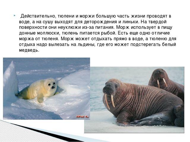 Действительно, тюлени и моржи большую часть жизни проводят в воде, а на сушу...