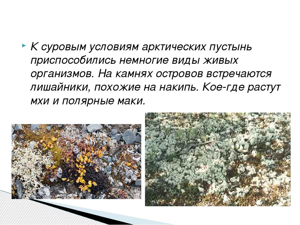 К суровым условиям арктических пустынь приспособились немногие виды живых орг...