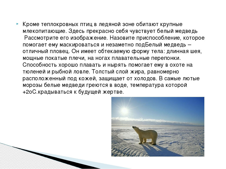 Кроме теплокровных птиц в ледяной зоне обитают крупные млекопитающие. Здесь п...