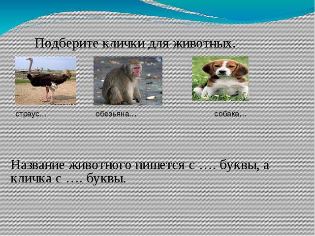 Подберите клички для животных. страус… обезьяна… собака… Название животного...