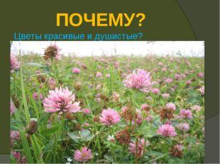 ПОЧЕМУ? Цветы красивые и душистые?