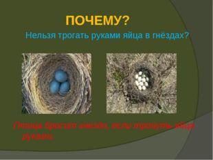 ПОЧЕМУ? Нельзя трогать руками яйца в гнёздах? Птица бросит гнездо, если трону