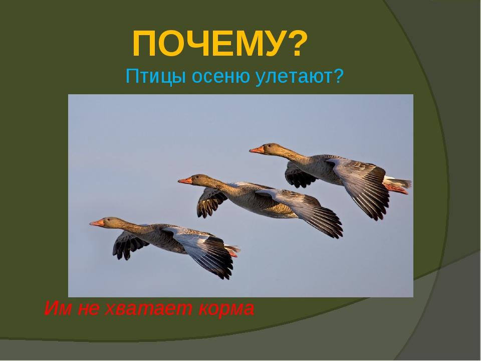 ПОЧЕМУ? Птицы осеню улетают? Им не хватает корма