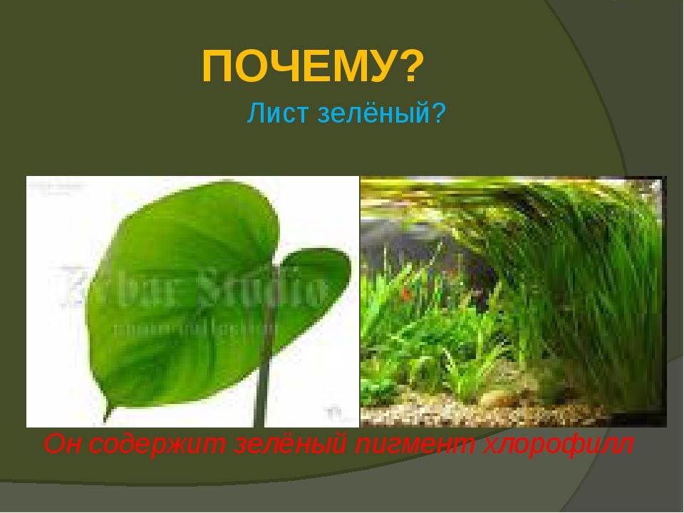 ПОЧЕМУ? Лист зелёный? Он содержит зелёный пигмент хлорофилл