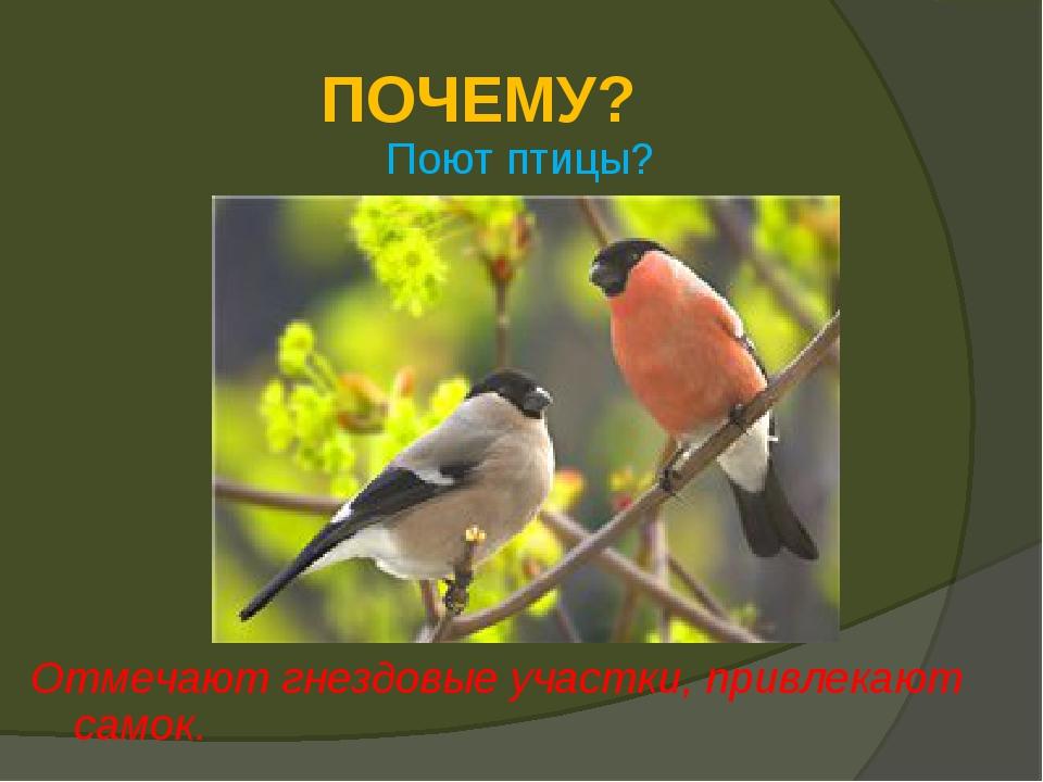 ПОЧЕМУ? Поют птицы? Отмечают гнездовые участки, привлекают самок.