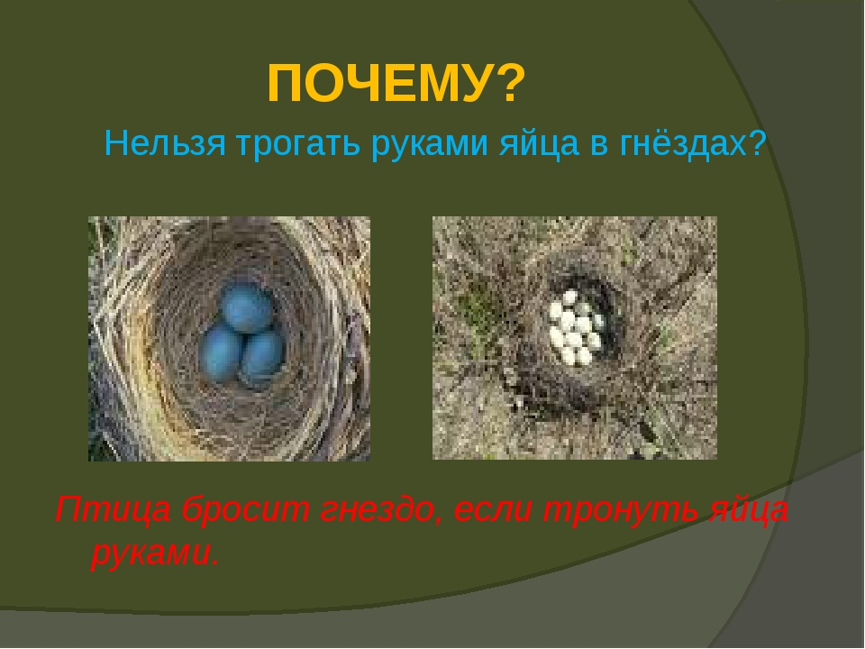 ПОЧЕМУ? Нельзя трогать руками яйца в гнёздах? Птица бросит гнездо, если трону...