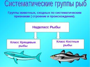 Класс Костные рыбы Группы животных, сходных по систематическим признакам ( ст