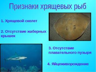 1. Хрящевой скелет 2. Отсутствие жаберных крышек 3. Отсутствие плавательного