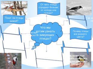 Что мы хотим узнать о зимующих птицах? Где добывают корм? Почему птицы все ра