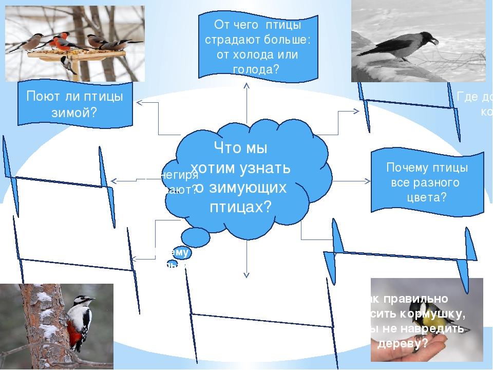 Что мы хотим узнать о зимующих птицах? Где добывают корм? Почему птицы все ра...