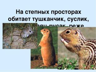 На степных просторах обитает тушканчик, суслик, сурок, заяц-русак, реже заяц-