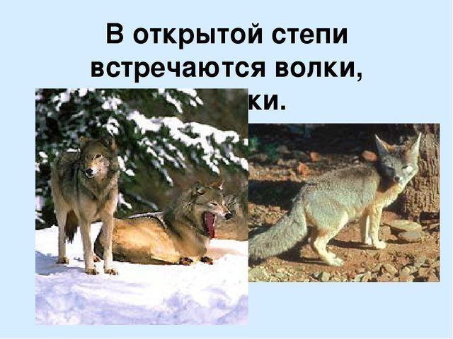 В открытой степи встречаются волки, корсаки.