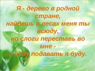 Я - дерево в родной стране, найдешь в лесах меня ты всюду, но слоги переставь