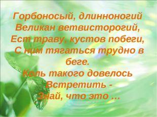 Горбоносый, длинноногий Великан ветвисторогий, Ест траву, кустов побеги, С ни