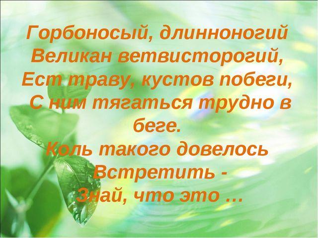 Горбоносый, длинноногий Великан ветвисторогий, Ест траву, кустов побеги, С ни...