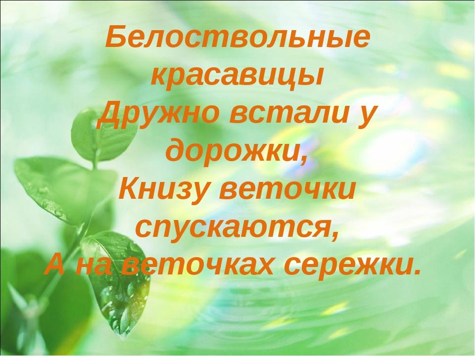Белоствольные красавицы Дружно встали у дорожки, Книзу веточки спускаются, А...