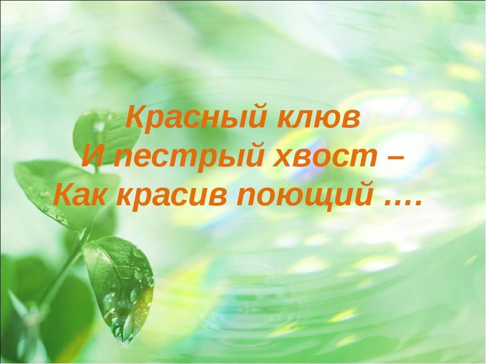 Красный клюв И пестрый хвост – Как красив поющий ….