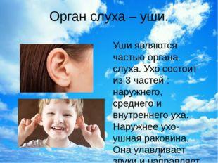 Орган слуха – уши. Уши являются частью органа слуха. Ухо состоит из 3 частей