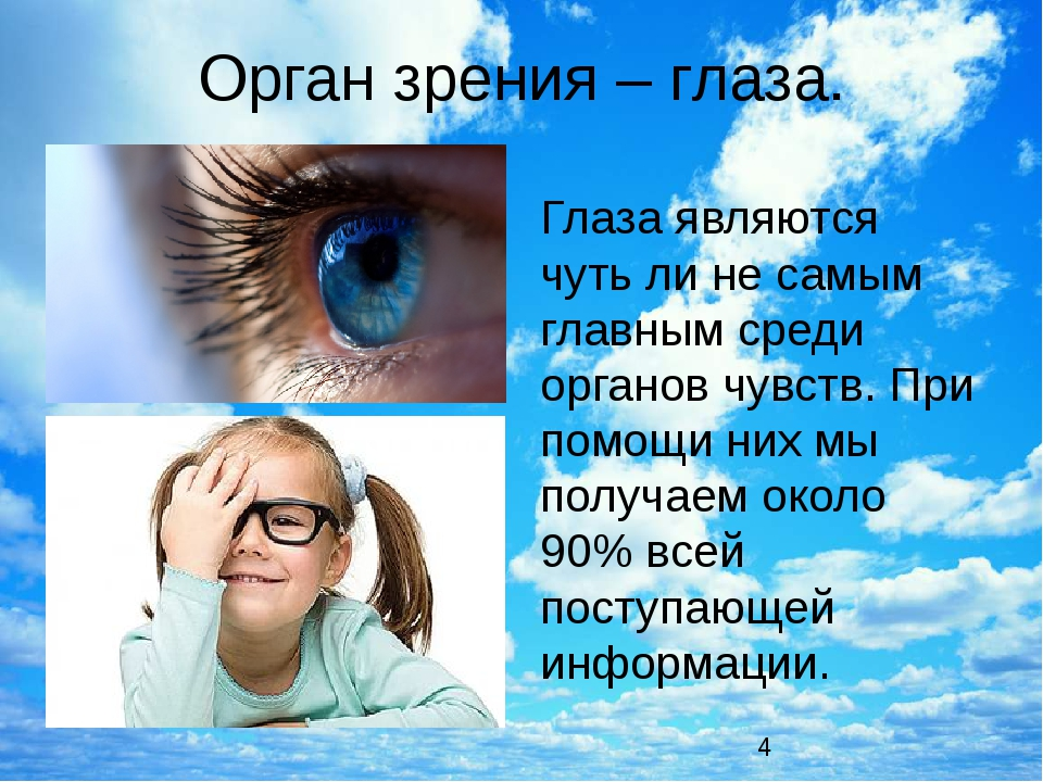 Орган зрения – глаза. Глаза являются чуть ли не самым главным среди органов ч...